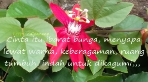 Cinta Ibarat Bunga