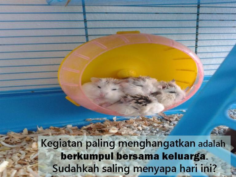 keluarga hamster imut lucu